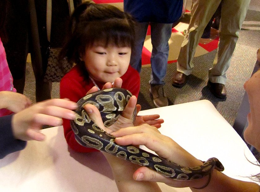 A Museum educator holding the Museum's ball-python as a little girls pets him.