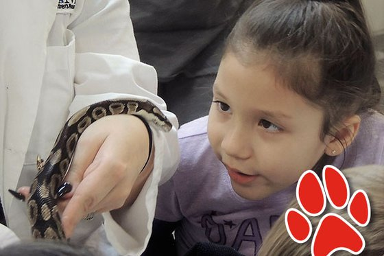 Young girl observing a ball python on the arm of a Museum staff member.