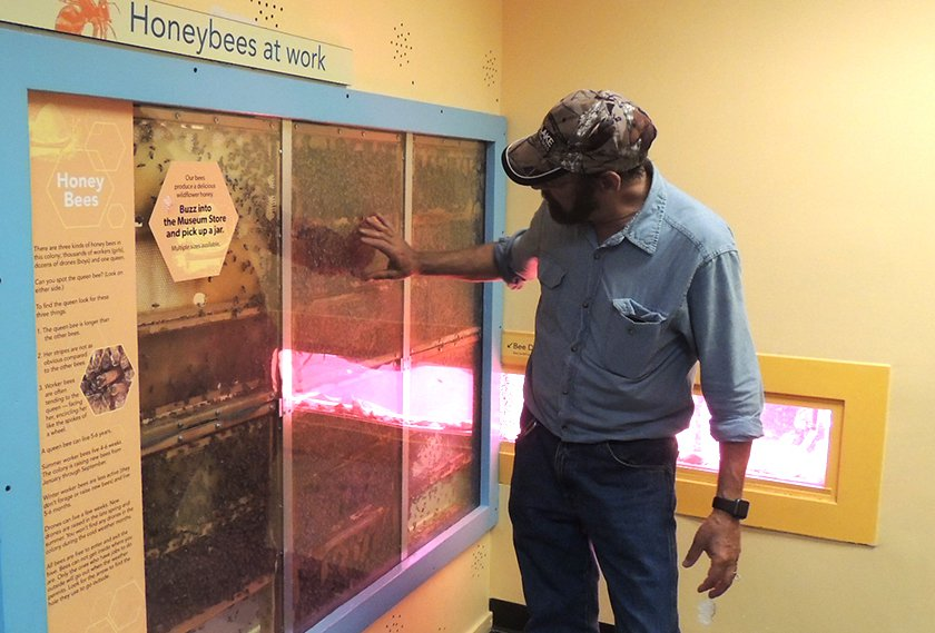 All About Bees | Long Island Children's Museum
