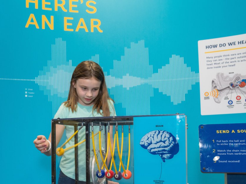 Three children examine a large-scale ear model.
